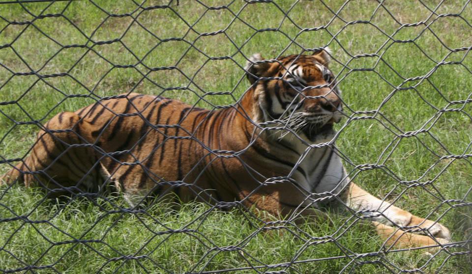 zoo near Manduria