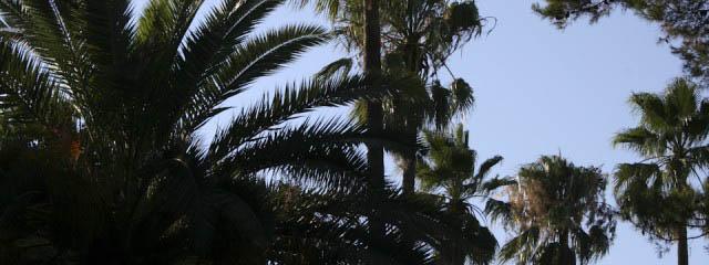 Palm trees in San Benedetto del Tronto