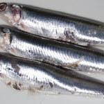 Photo of How to make marinated anchovies - Italian Notes