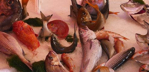 Fish from Palermo markets