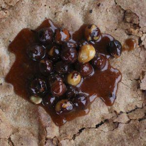 Hazelnut cake from Piedmont