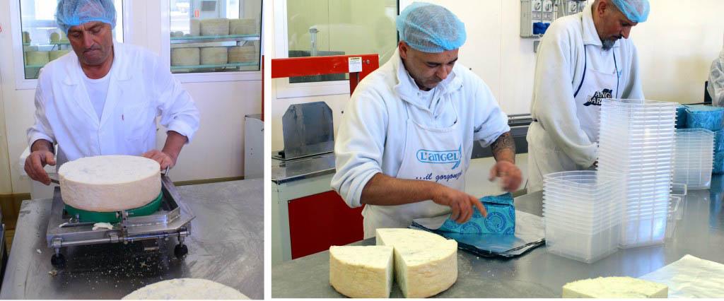 Visit to a gorgonzola dairy