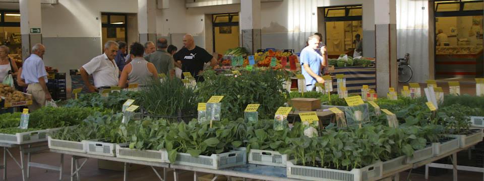 Food shopping in Emilia-Romagna