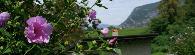 Trentino-Alto Adige – Trentino-South Tyrol