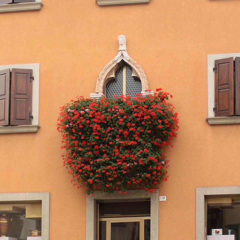 Photo of window boxes in San Daniele del Friuli
