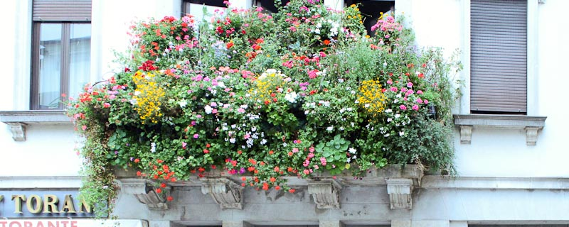 Photo of window boxes in San Daniele del Friuli