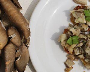 Oyster mushroom bruschette
